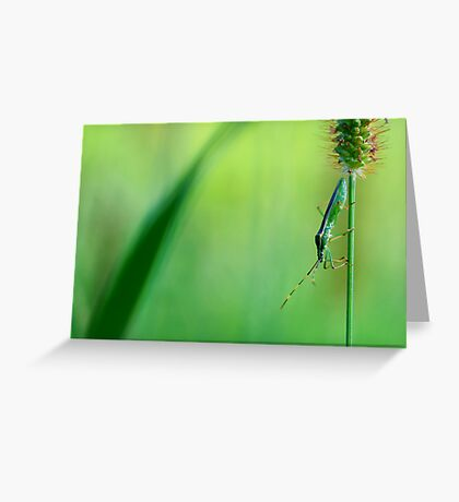 Insect on a grass stalk, Aoyama, Tokyo, Japan Greeting Card