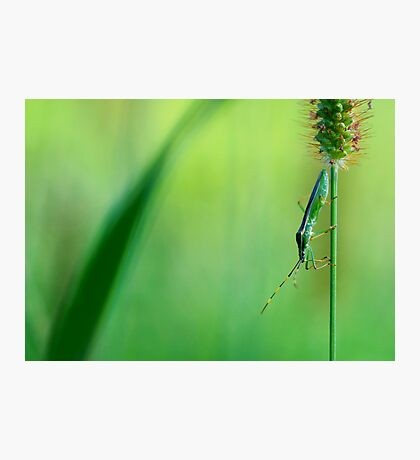 Insect on a grass stalk, Aoyama, Tokyo, Japan Photographic Print