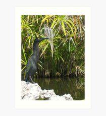 Aquatic Bird Art Print