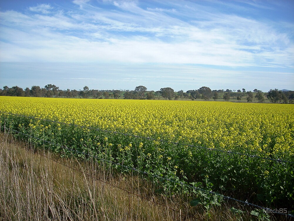 Endless Canola by Mitch85