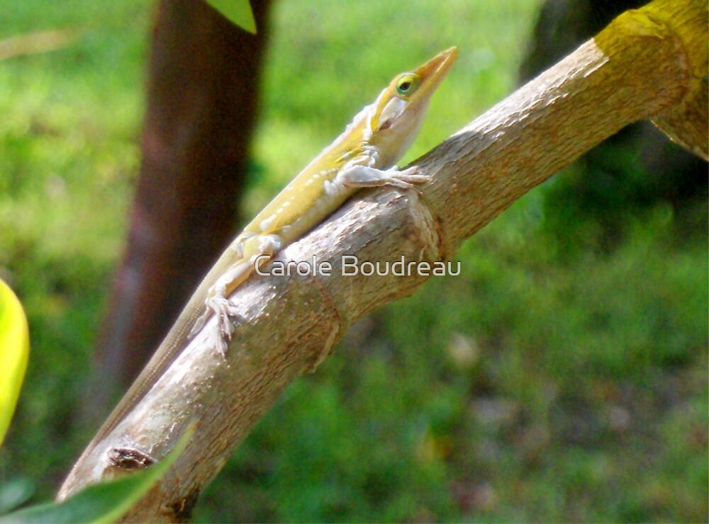 Yellow Lizard by Carole Boudreau