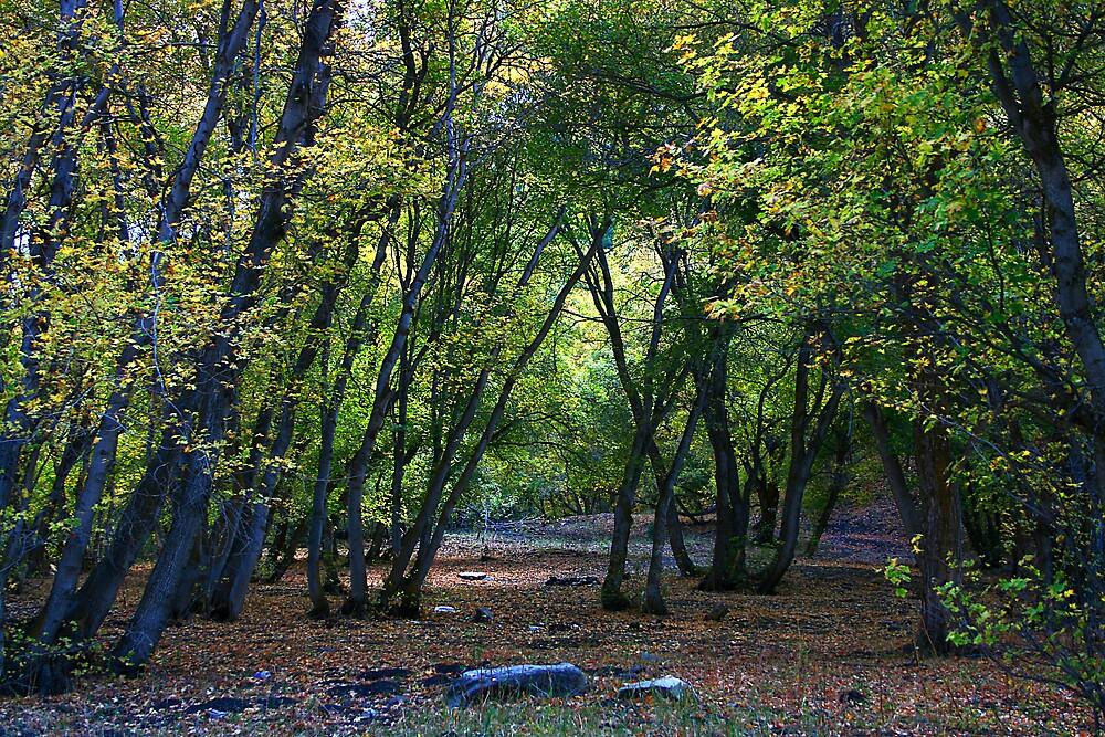 Autumn Begins by Ken Fortie