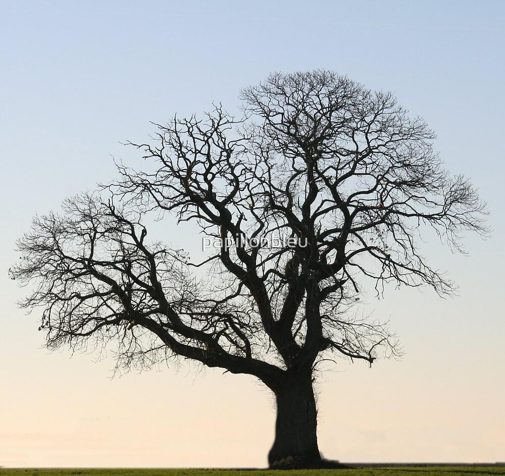 One Tree by Pamela Jayne Smith
