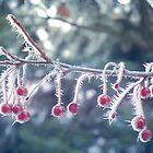 Berry Ice Freeze by PolkaDotStudio