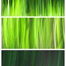 Organic - Triptych by Kitsmumma