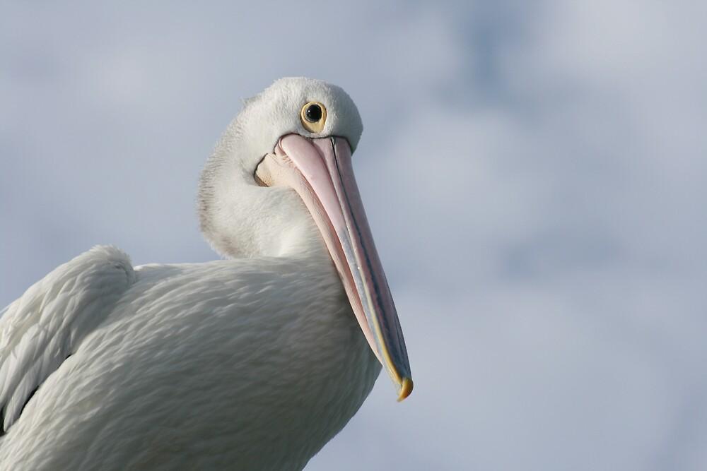 Pete the pelican by Philip Hancock