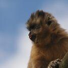 Cheeky Monkey by Pamela Jayne Smith