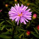 Floweret by Alojzy