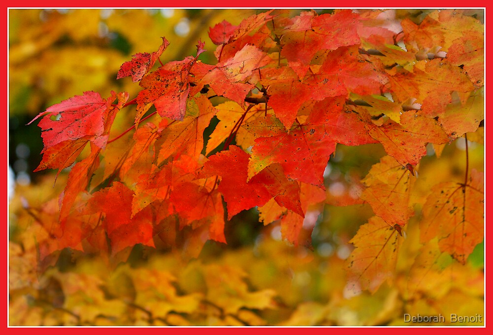 Orange Orange Leaves by Deborah  Benoit