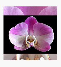 Phalaenopsis Orchid Romantic Sweet Photographic Print
