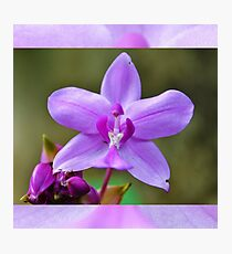 Orchid beauty fashion tshirt Photographic Print