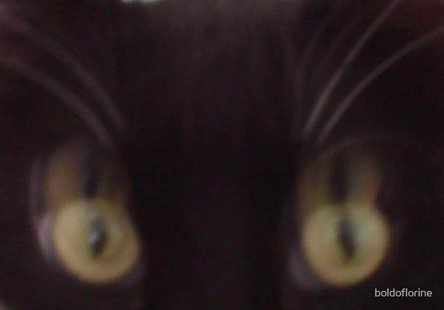 cat's eyes by boldoflorine