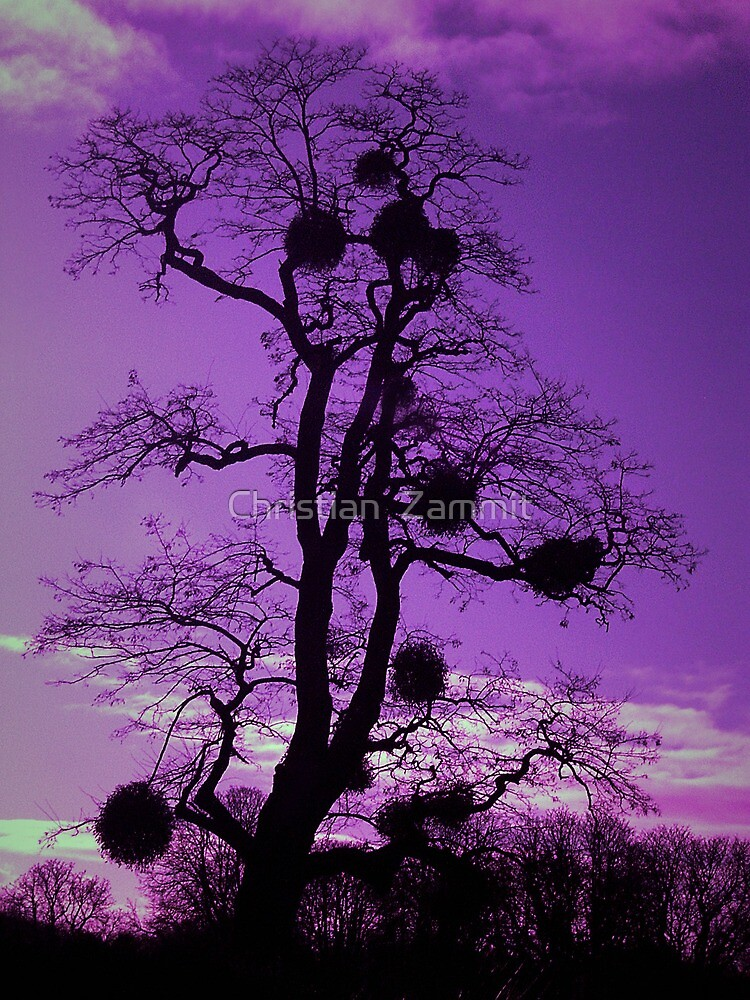 Tree - Purple sky by Christian  Zammit