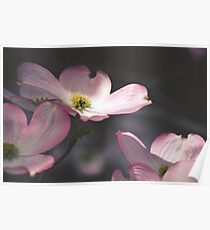 Pink Magnolia Poster