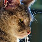 Our Cat Meeka by TJ Baccari Photography