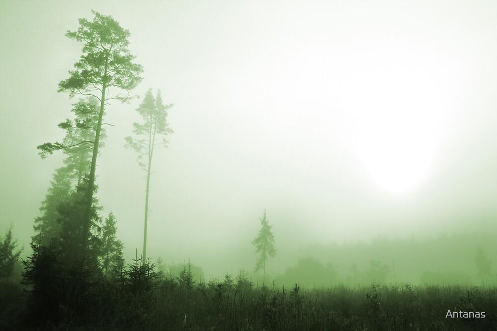 Silence in the foggy by Antanas