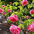 Wild Roses by Ludwig Wagner