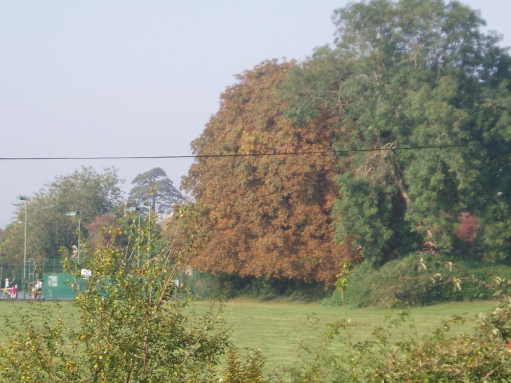 Autumn Colour by Wimburian