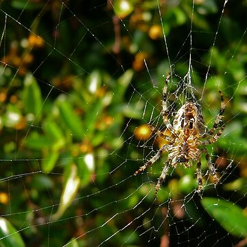 Spider! by laconic