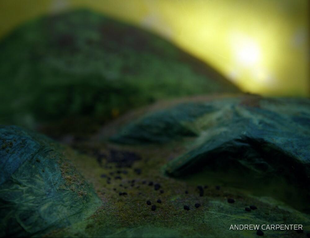 fantasy fields by ANDREW CARPENTER