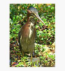 Lámina fotográfica Bird stance