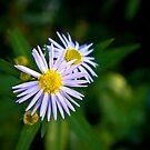 Petite fleur by Cvail73