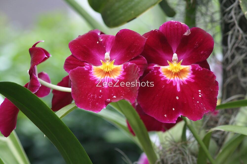 Orchid  by ZeeZeeshots