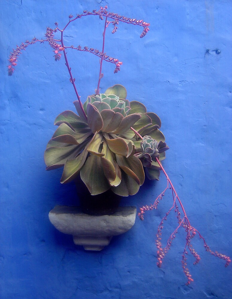 Flower pot on the wall by mojgan