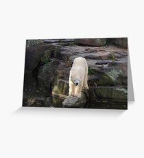 Polar Bear Rock (Berlin)  Greeting Card