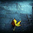 Winter has arrived by iamelmana