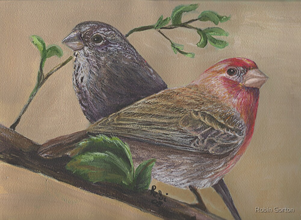 House finch pair by Robin Gorton