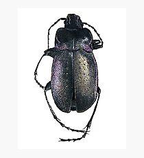 Broken Beetle Photographic Print