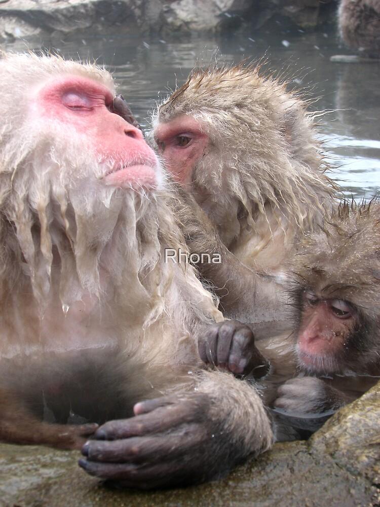 snow monkeys 3 by Rhona