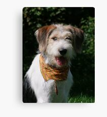 Good News for Rufus Canvas Print