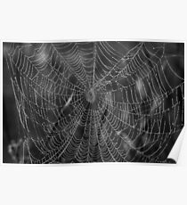 Spider Web With Pearls Of Dew Poster