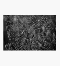 Spider Web With Pearls Of Dew Photographic Print
