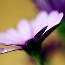 Colour Of Life XXXVI by Didi Bingham