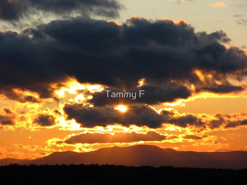 Oranges by Tammy F