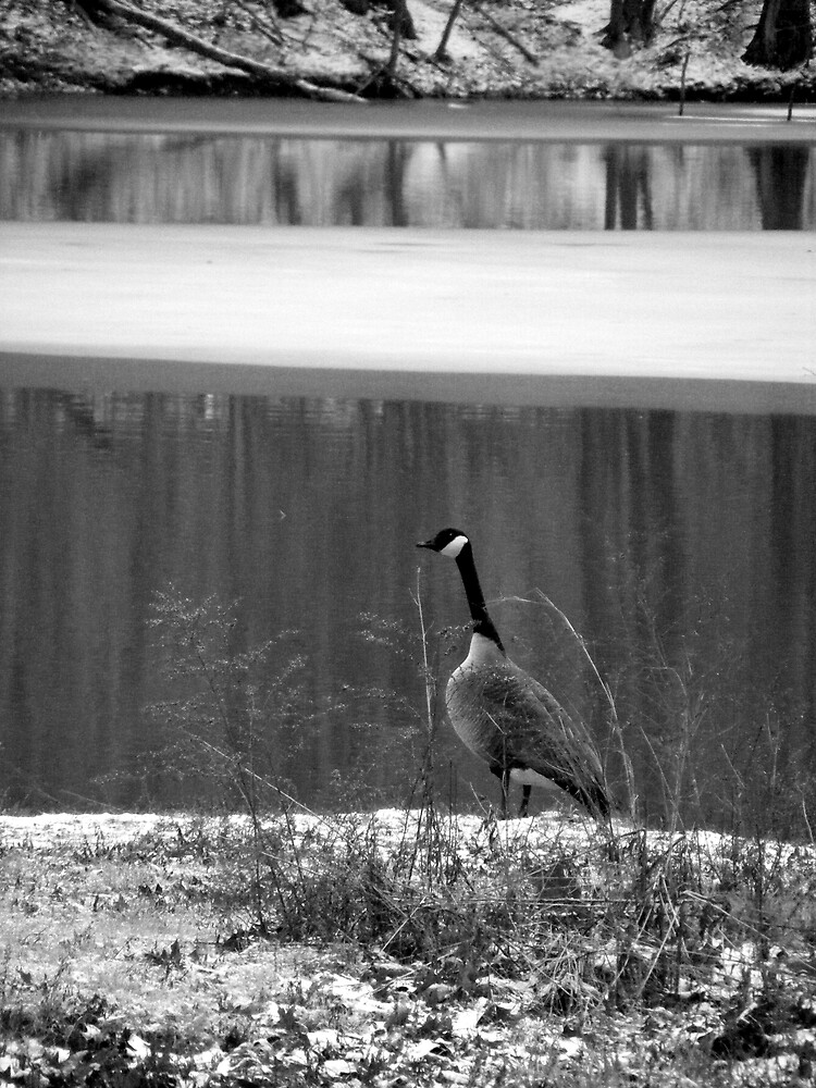 Goose in B&W by Tamara Bobst