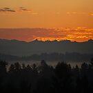 Morning Dawn by Kat Miller