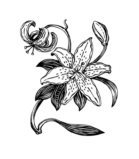 Pósters «Una simple flor de lirio» de tommek | Redbubble