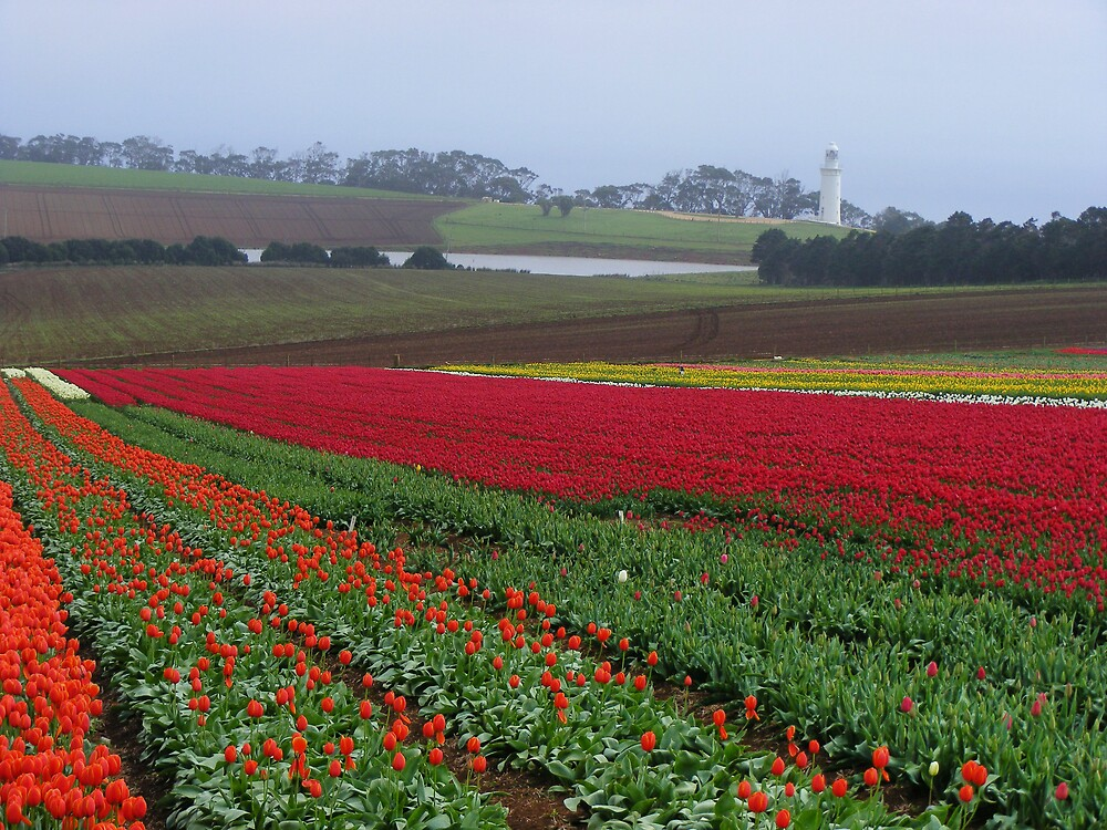 Table Cape lighthouse, Wynyard, and tulips galore! (Tasmania) by gaylene