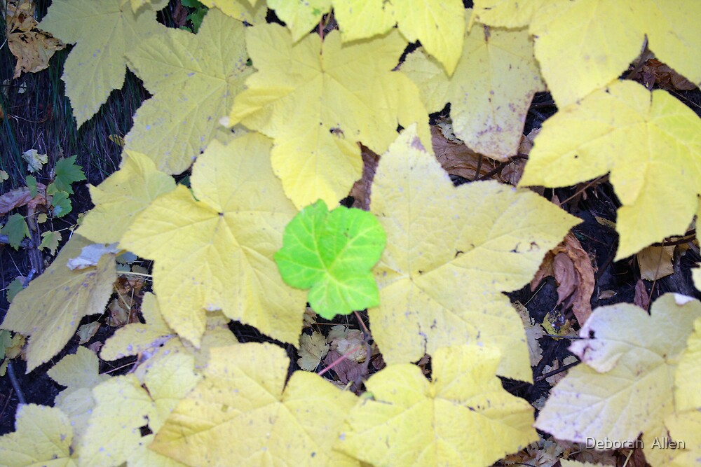 One Green Leaf by Deborah  Allen