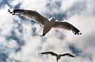 Birds Eye View by Leanne Robson