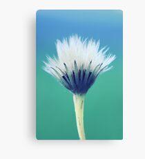 natural brush Canvas Print