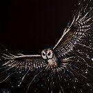 Bird Series - Owl by tank