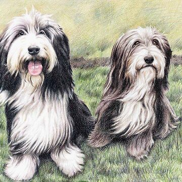 Bearded Collies by ArtsandDogs
