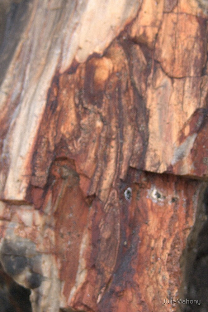Petrified Wood by JulieMahony