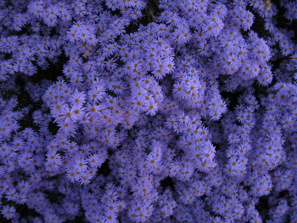 The Colour Purple by Lee Revell