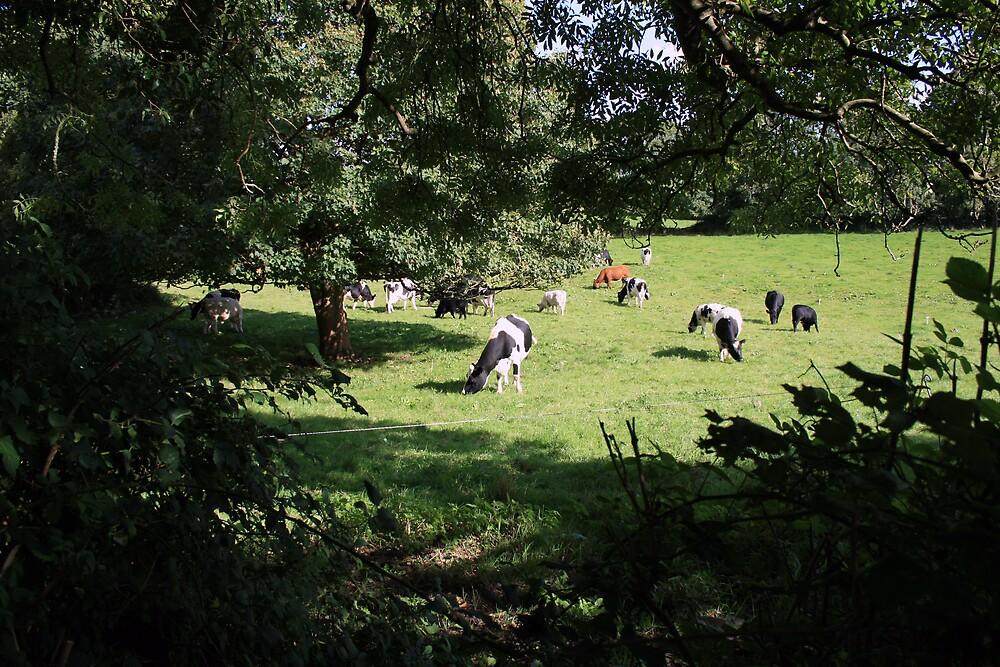 County Clare farm scene 3 by John Quinn